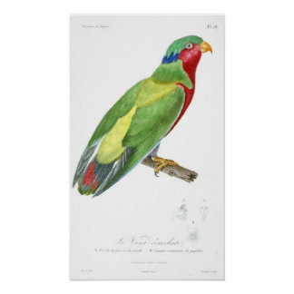 Vintage French drawing-1831-Parrot-green Poster