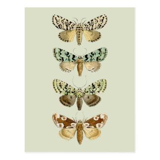 Vintage French Moths Postcard