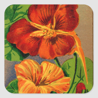 Vintage French Nasturtium Flower Seed Package Square Sticker
