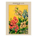Vintage French Seed Art Forget Me Nots - myosotis