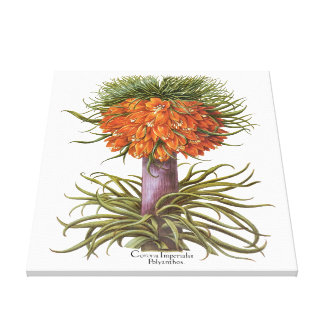 Vintage Fritillaria Flowers by Basilius Besler Stretched Canvas Prints
