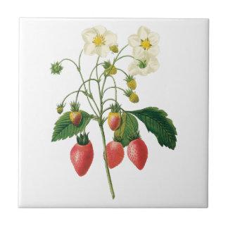 Vintage Fruit Berries Food Strawberries by Redoute Tile