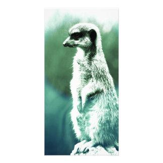 Vintage, funny meerkat photo card