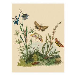 Vintage Garden Insects, Butterflies, Caterpillars Postcard