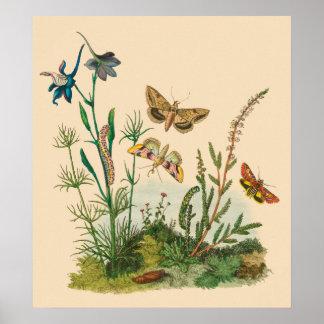 Vintage Garden Insects, Butterflies, Caterpillars Poster