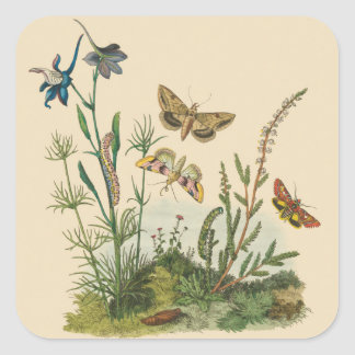 Vintage Garden Insects, Butterflies, Caterpillars Square Sticker
