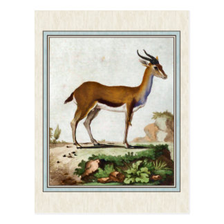 Vintage Gazelle Illustration Postcard