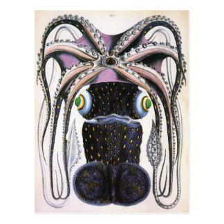 Vintage Giant Octopus or Squid, Marine Life Animal Postcard