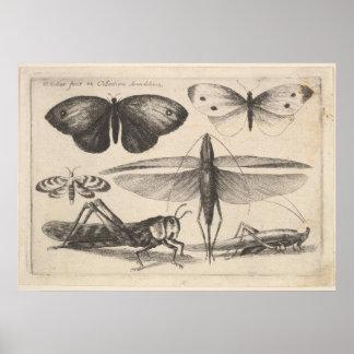Vintage Grasshopper Entomology Insect Print (62)