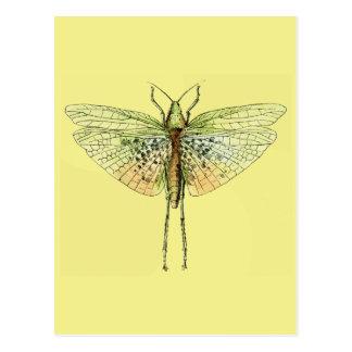 Vintage Grasshopper Print Postcard