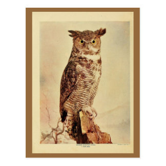 Vintage great horned owl color litho photo postcard