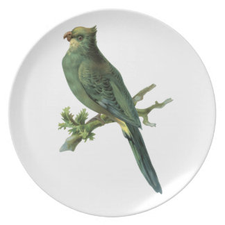 Vintage Green Parrot Party Plate
