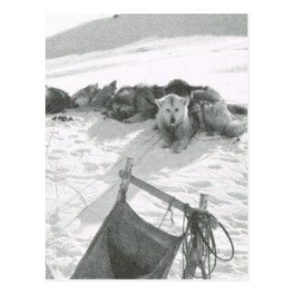 Vintage Greenland, Dog team and sledge Postcard
