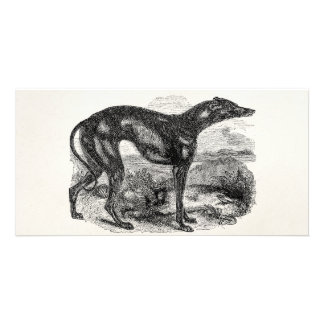Vintage Greyhound Dog 1800s - Greyhounds Dogs Picture Card