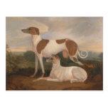 Vintage Greyhounds Postcard