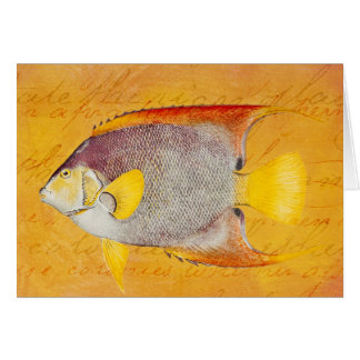 Vintage Hawaiian Angel Fish - Antique Hawaii Card