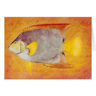 Vintage Hawaiian Angel Fish - Hawaii Antique Card