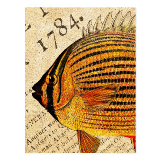 Vintage Hawaiian Butterfly Fish Customized Fishes Postcard