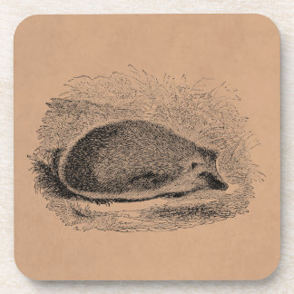 Vintage Hedgehog 1800s Hedgehogs Illustration Coaster