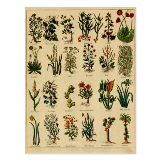 Vintage Herbal Postcard Series - 6