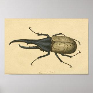 Vintage Hercules Beetle Natural History Print