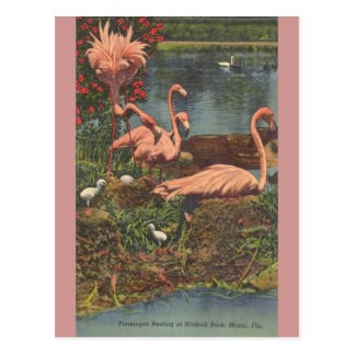 Vintage Hialeah Park Miami Flamingos Post Card