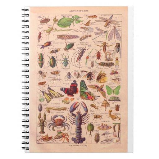 Vintage historic,  Arthropods Spiral Note Books