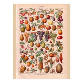 Vintage historic  fruit postcard