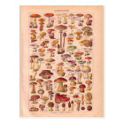 Vintage historic Mushrooms Postcard