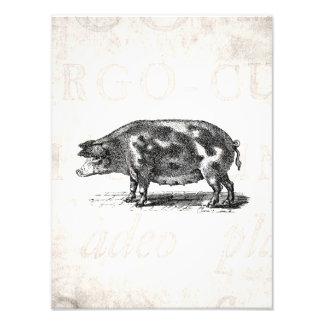 Vintage Hog Illustration on Old Paper 1800s Pig Photo Print