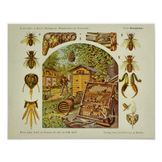 Vintage Honey Bee Anatomy Beekeeper Art Print