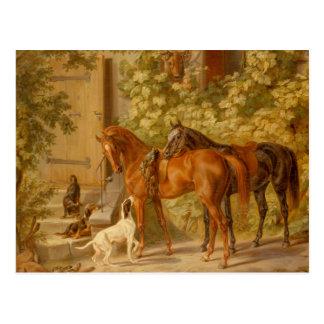 Vintage Horses at the Porch Albrecht Adam Postcard