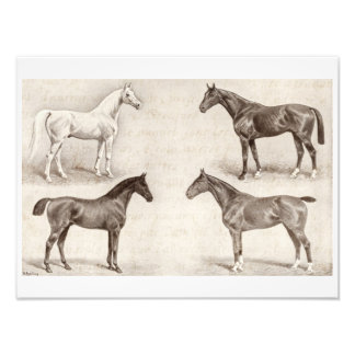 Vintage Horses - Horse and Pony Templates horse Art Photo