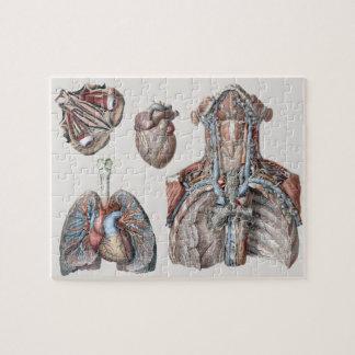 Vintage Human Anatomy Chest, Organs, Eyes Jigsaw Puzzle