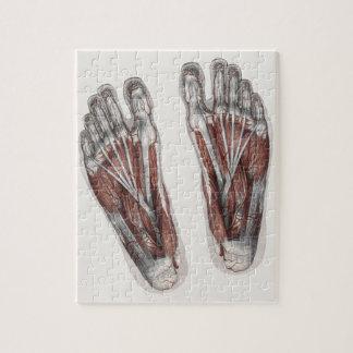 Vintage Human Anatomy Footprint Podiatry Feet Jigsaw Puzzle