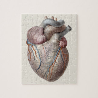 Vintage Human Anatomy Heart Organs Healthy Jigsaw Puzzle