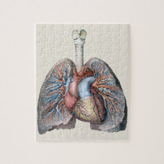 Vintage Human Anatomy Lungs Heart Organs Blood Jigsaw Puzzle