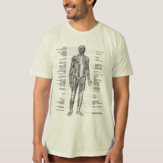 Vintage - Human Anatomy Muscles Front & Back Views T-Shirt