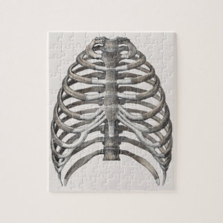 Vintage Human Anatomy Skeleton Skeletal Ribs Bones Jigsaw Puzzle