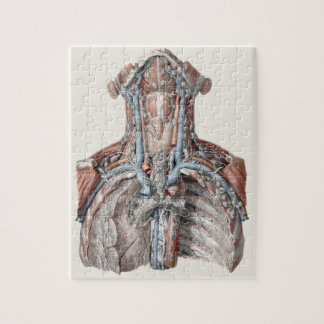 Vintage Human Anatomy Throat, Neck, Chest, Ribs Jigsaw Puzzle
