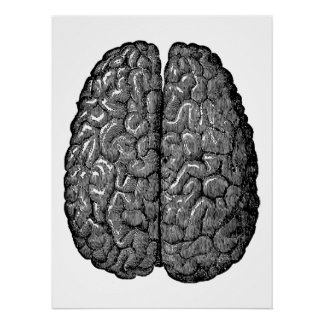 Vintage Human Brain Illustration Perfect Poster