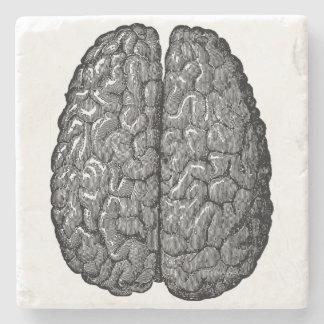 Vintage Human Brain Illustration Stone Coaster