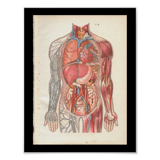 Vintage Human Internal Anatomy Print