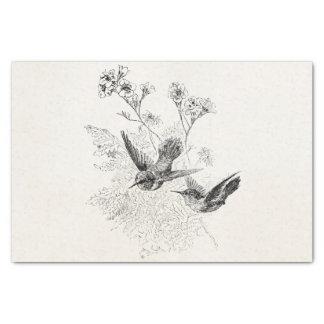 Vintage Hummingbird Antique Birds Template Tissue Paper
