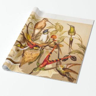 Vintage Hummingbird Bird Hummingbirds Birds  Birds