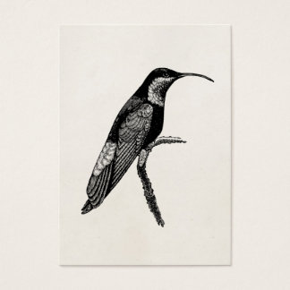 Vintage Hummingbird Bird Illustration Template Business Card