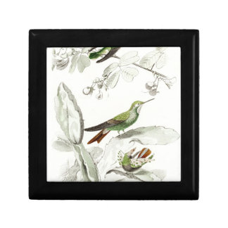 Vintage Hummingbird Illustration - 1800's Birds Gift Boxes