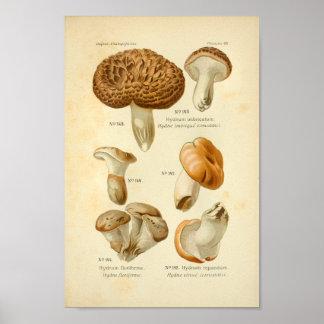 Vintage Hydnum Brown Mushrooms Art Print French