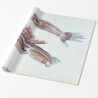 Vintage Illustration Anatomy Human Arms and Hands Wrapping Paper