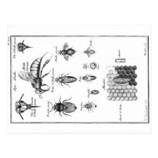 Vintage Illustration - Bees & Honeycomb Postcard